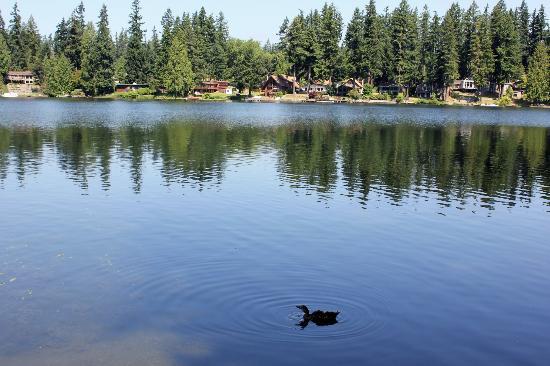 Pine Lake Park: Pine Lake