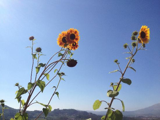 Casa Das Torres: Fleurs de la piscine
