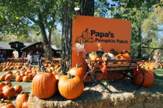Papa S Pumpkin Patch Bismarck Nd Hours Address Top