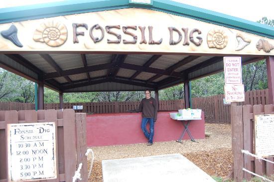 Dinosaur World: Fossil Dig
