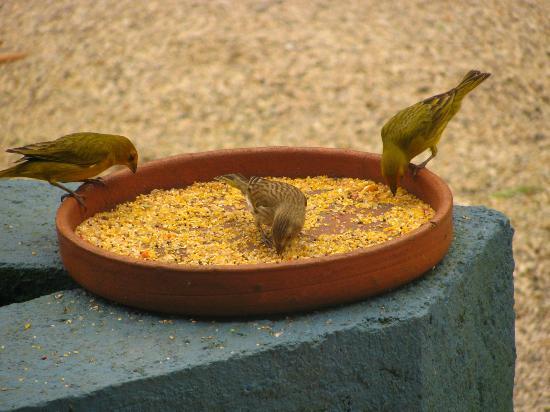 Pousada Penareia: Pássaros vem se alimentar nos comedouros.