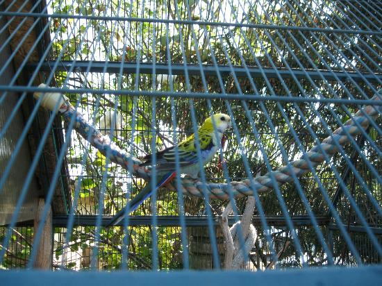 Smugglers Villa Resort: One of the resident parrots