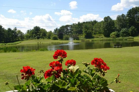 Lake George RV Park: Fishing Pond