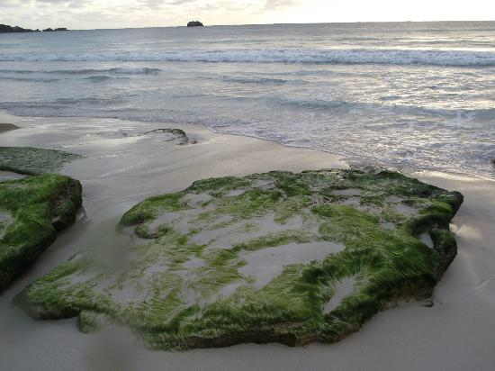 Hamelin Bay Holiday Park: Hairy green rock