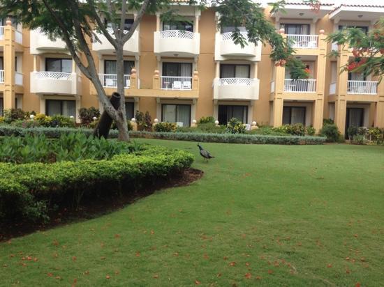Viva Wyndham Dominicus Palace: jardin