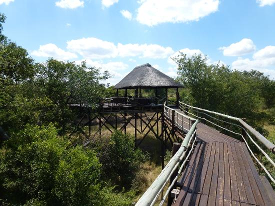 Ezulwini Game Lodges: Bridge to the viewing platform at Billy's Lodge