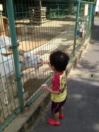 Omuta City Zoo: 山羊さんへご飯