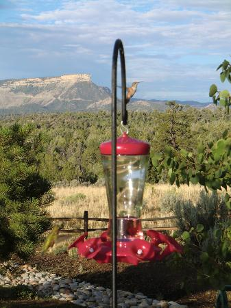 Flagstone Meadows Ranch Bed and Breakfast: View of hummingbird and Mesa Verde's Knife Edge in the background