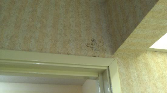 Best Western Canton Inn: MOLD growing on the wall