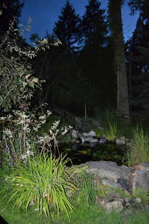 Park Lane Resort & Motel: Pete and Wendy's pond at night~~