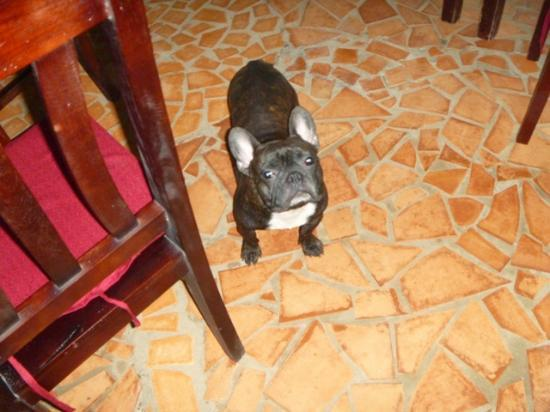 Paris Beach Phu Quoc: one of the hotel dogs
