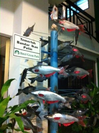 Temerloh, Malasia: Weird display of famous local fish