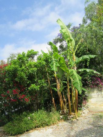 La Casa di Ketty : il banano in giardino