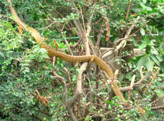 Visakhapatnam Zoo: Zoo