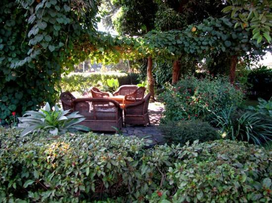 Olgau0027s   The Italian Corner: Olgau0027s Garden