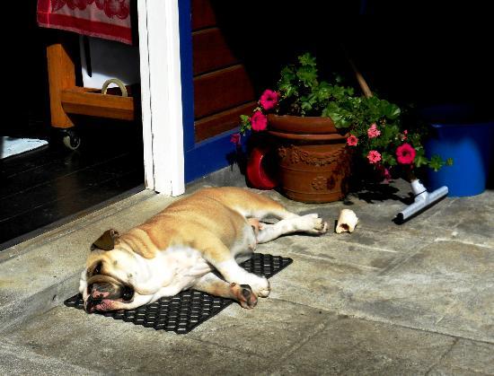 O Zimbreiro: The owner's dog