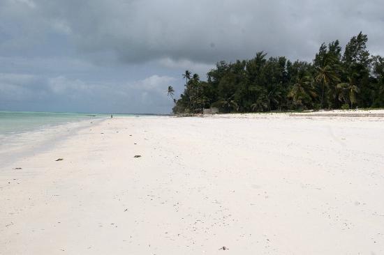 Kilimani Kwetu Bungalows : Het strand