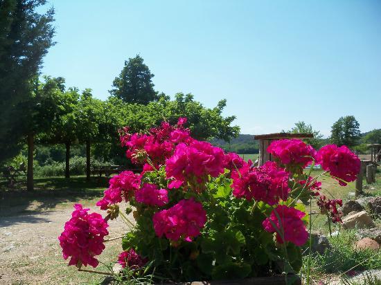 Centre Equestre La Reserve : Vue du parc ombragé