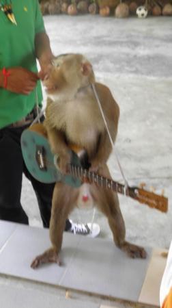 Phuket Monkey School