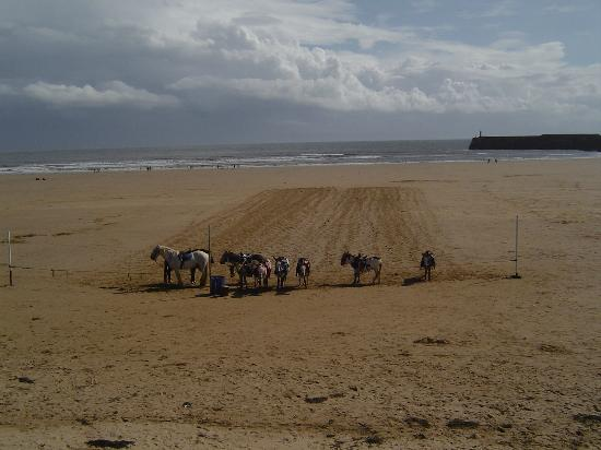 Donkeys at Porthcawl/Coney Beach