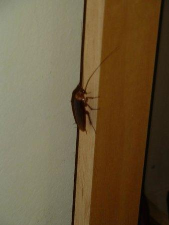 Hostal Baler: cafard dans notre chambre