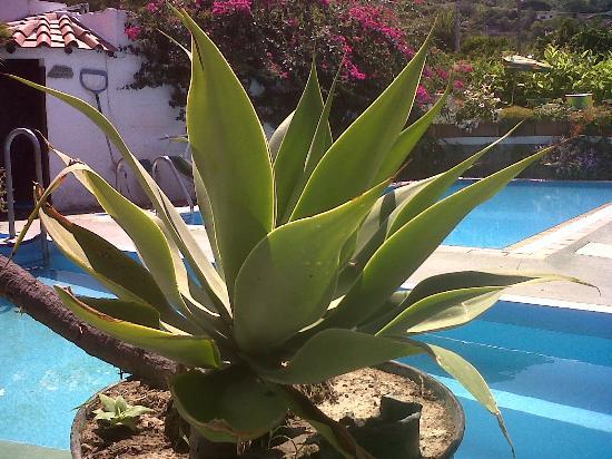 Hotel Villa Janto : Le piscine di Villa Jantò