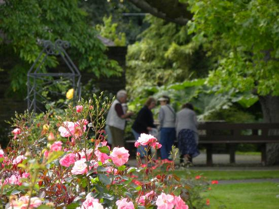 Tralee Town Park: lunching under the tree and roses for a setting