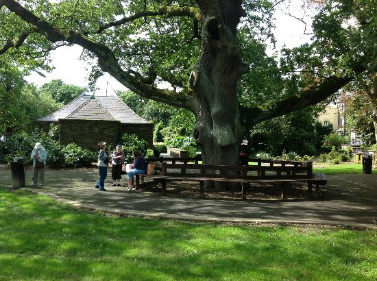 Big trees with benches picture of tralee town park for Park towne
