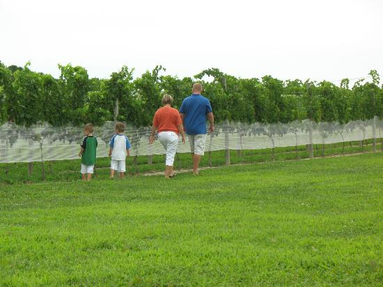 Hawk Haven Vineyard and Winery: Strolling
