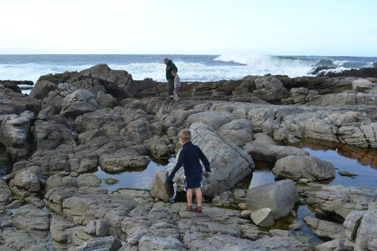 The Potting Shed Accommodation: Rock pooling
