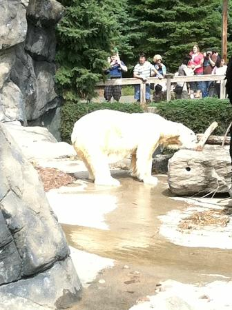 Seneca Park Zoo: Typical Zoo