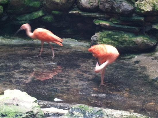 Seneca Park Zoo: Typical Zoo