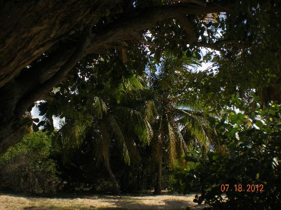 Happy Bay Beach: the shade behind me