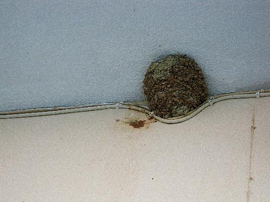 Agios Ioannis Peristeron, Greece: Nid de guêpes sur le balcon