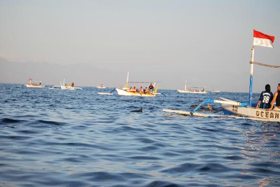 Aneka Lovina Beach Hotel : Bateaux à la poursuite d'un dauphin venu chercher de la nourriture
