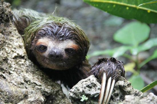 Coral Hill Bungalows: the sloth!