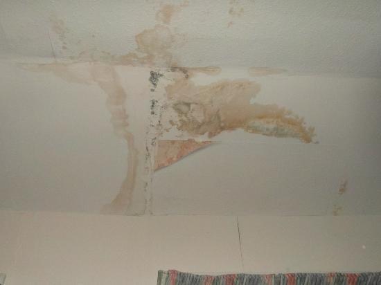 ذا دريدنوت هوتل: The Damp On The Ceiling 