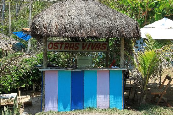 Rocka Beach Lounge & Restaurant: Ostras frescas