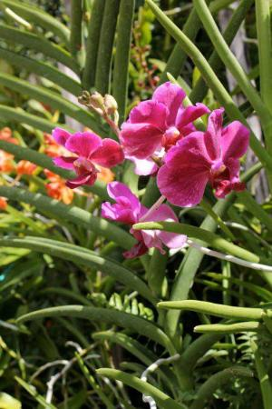 The Blue House Boutique Bed & Breakfast : I love orchids.