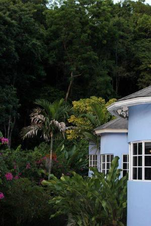 The Blue House Boutique Bed & Breakfast: Look at the lush forest in the background.