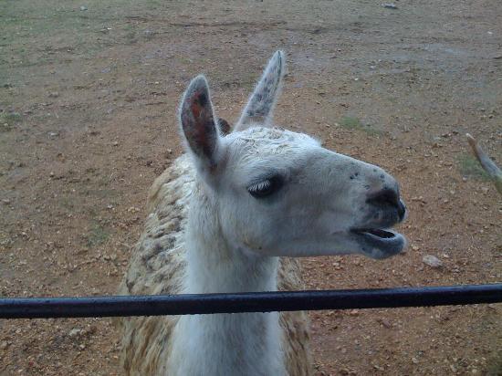 Exotic Resort Zoo : Hello