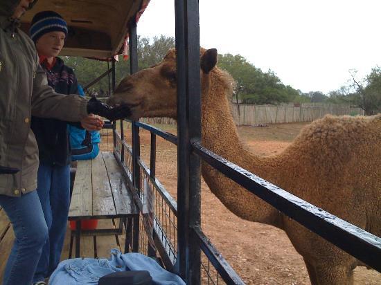 Exotic Resort Zoo : Feeding time