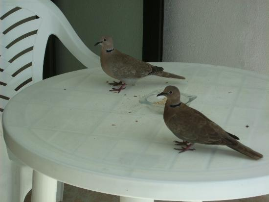 Guinea Apartments: regular visitors