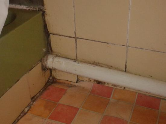 Cherry Lodge Guest House: More mould