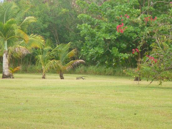 Montpelier Plantation & Beach: Monkeys!!