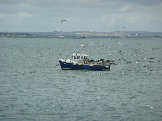 Birds at the Dublin Bay