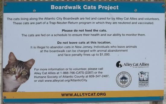 Atlantic City Boardwalk : Boardwalk Cat Sign