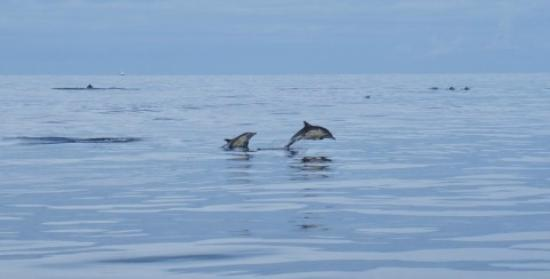 Sea Life Surveys: Dolphins