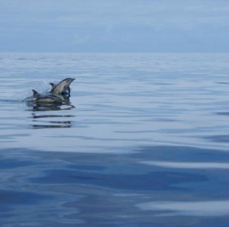 Sea Life Surveys: More Dolphins