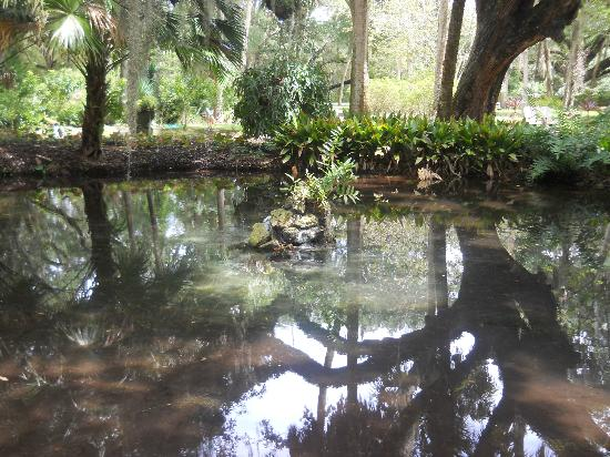 Washington Oaks Gardens State Park: nice pond
